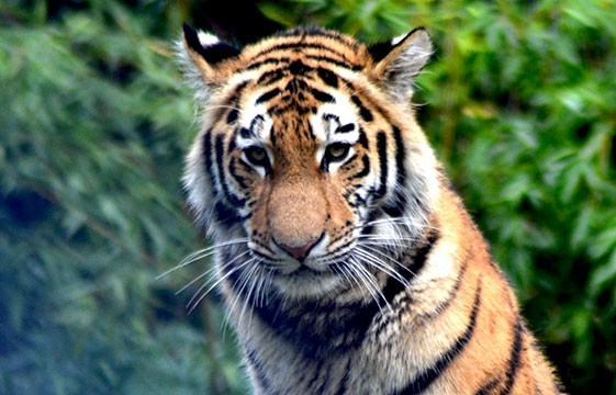 Eindrücke vom Duisburger Zoo!