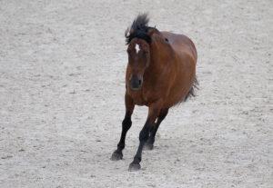 Mustang Makeover 2021 – zu Gast in Aachen