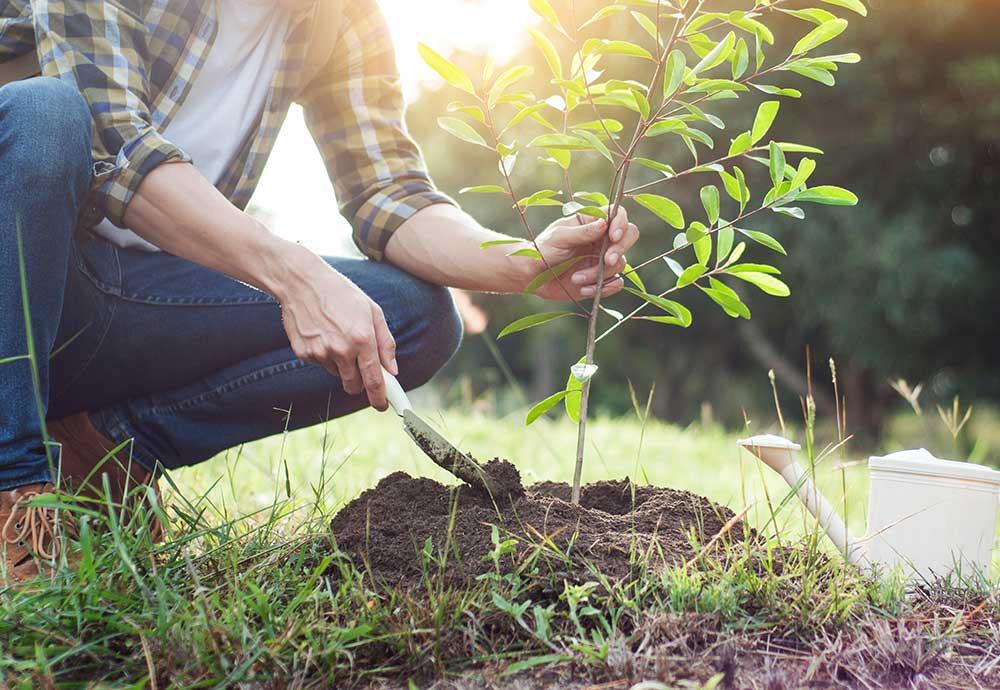 Baum pflanzen_ Symbolbild